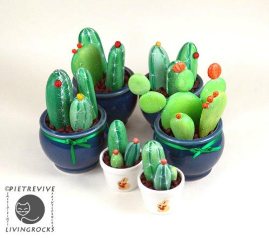 cactus-piedras-2