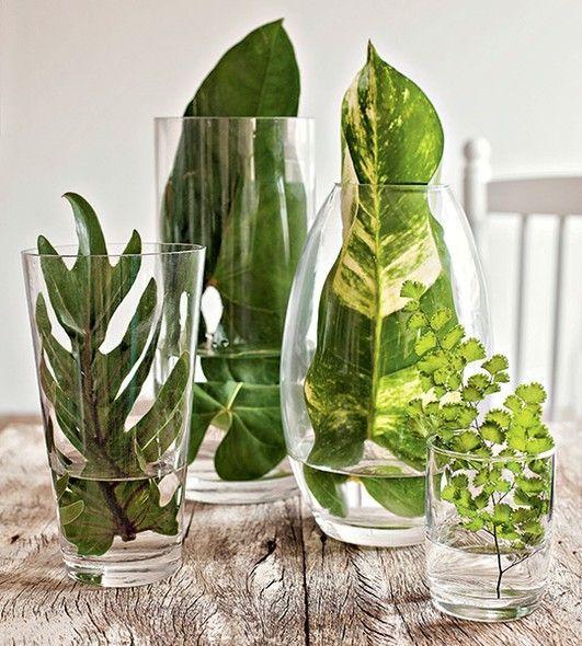 Hojas en jarrones de cristal