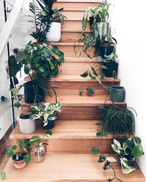 Plantas en escalones